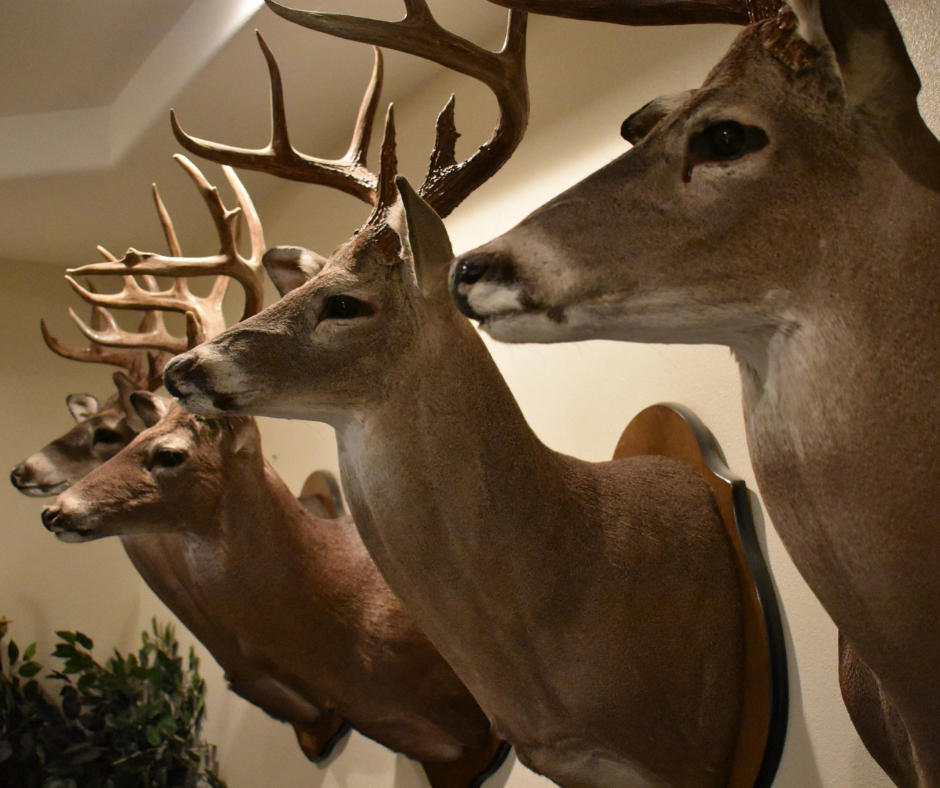 5 Things to Consider while Choosing Your First Deer Rifle