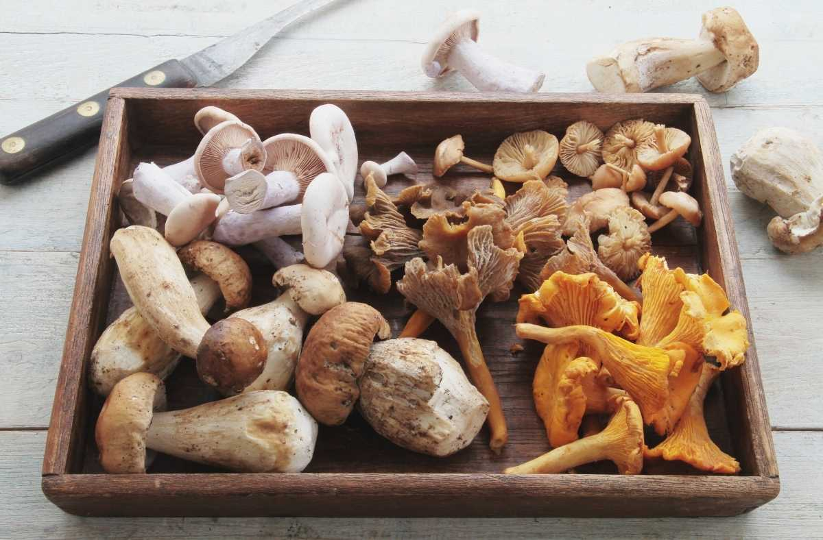 Answering Mushroom and Pregnancy Facts: Can You Eat Mushrooms