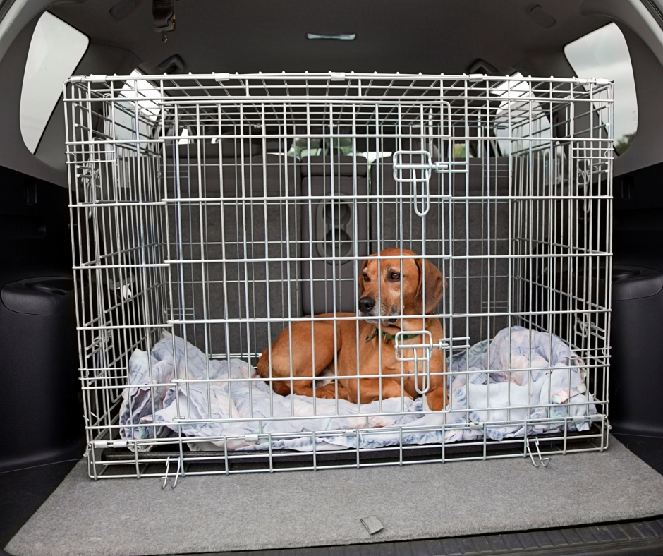 Guide For Selecting Indestructible Heavy-Duty Dog Crates