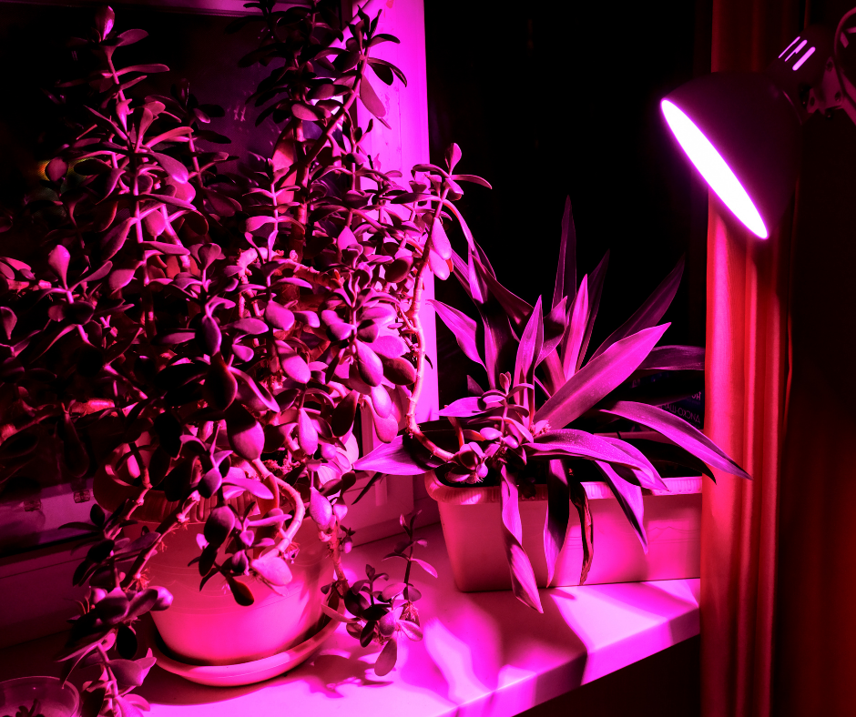 How to care for Plants That Grow in the Dark