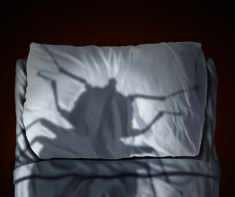 What You May Not Know About Bed Bugs