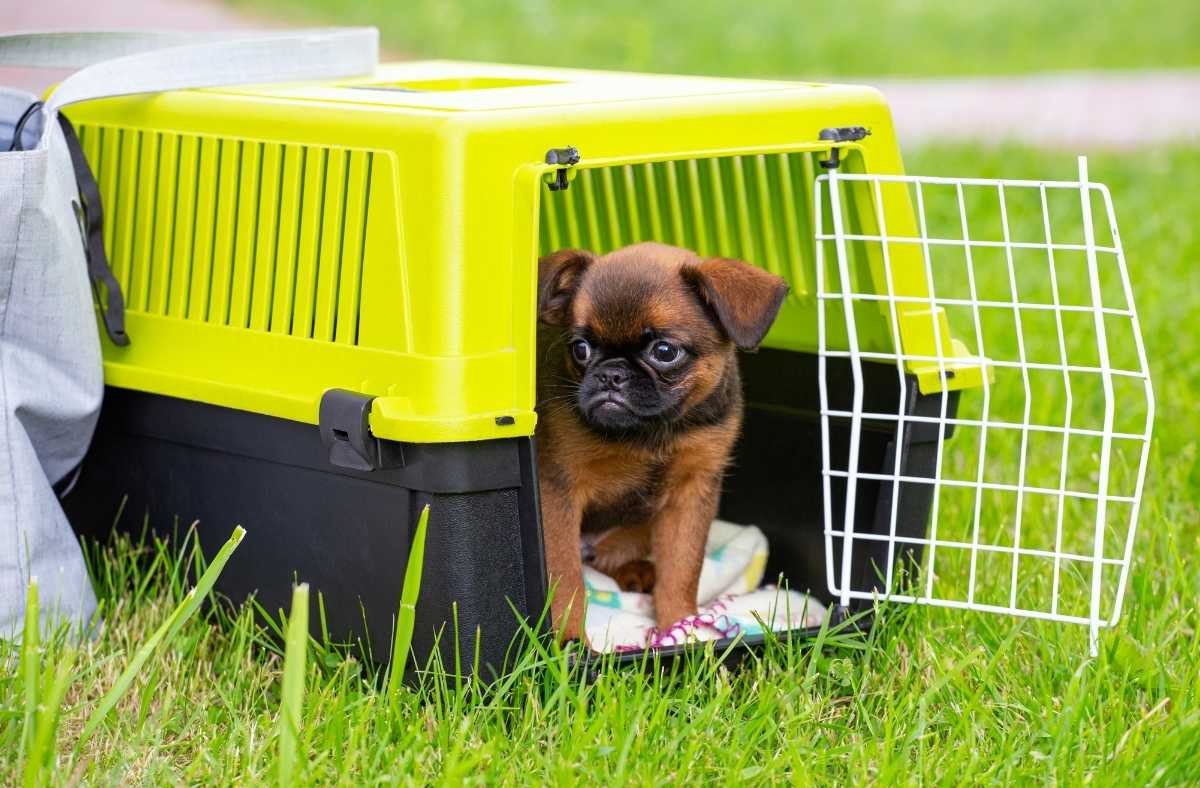 5 Tips to Safely Transport Your Dog
