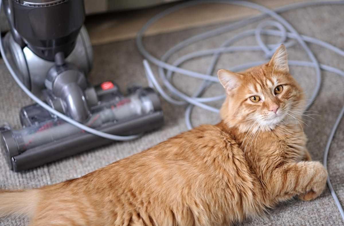How to Keep Your Home Clean if You Have Pets