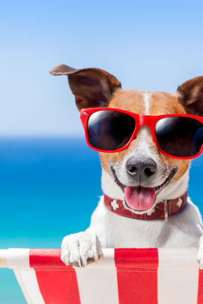 The Best Ways to Find Dog Friendly Cottages