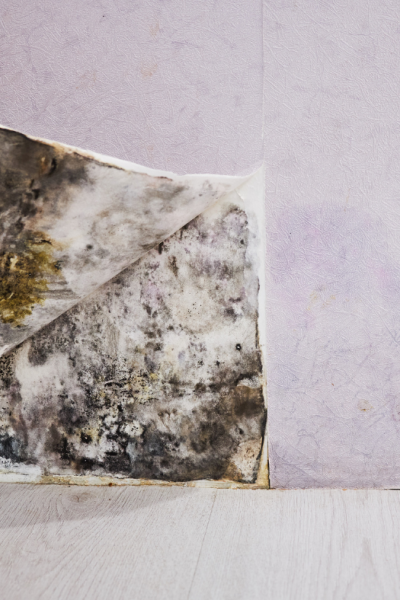 The Dangers Of Living With Mold In A House