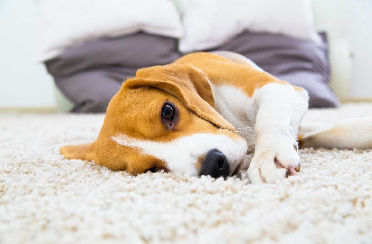 Top 5 Secrets How to Maintain Your New Carpet
