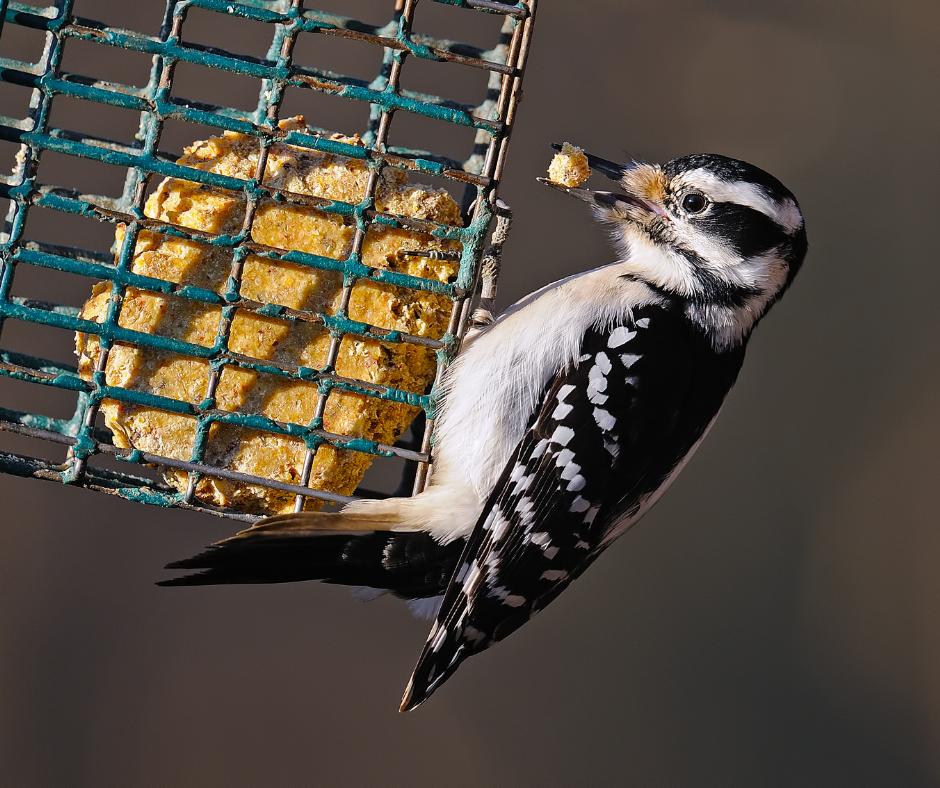 bird using suet feeder