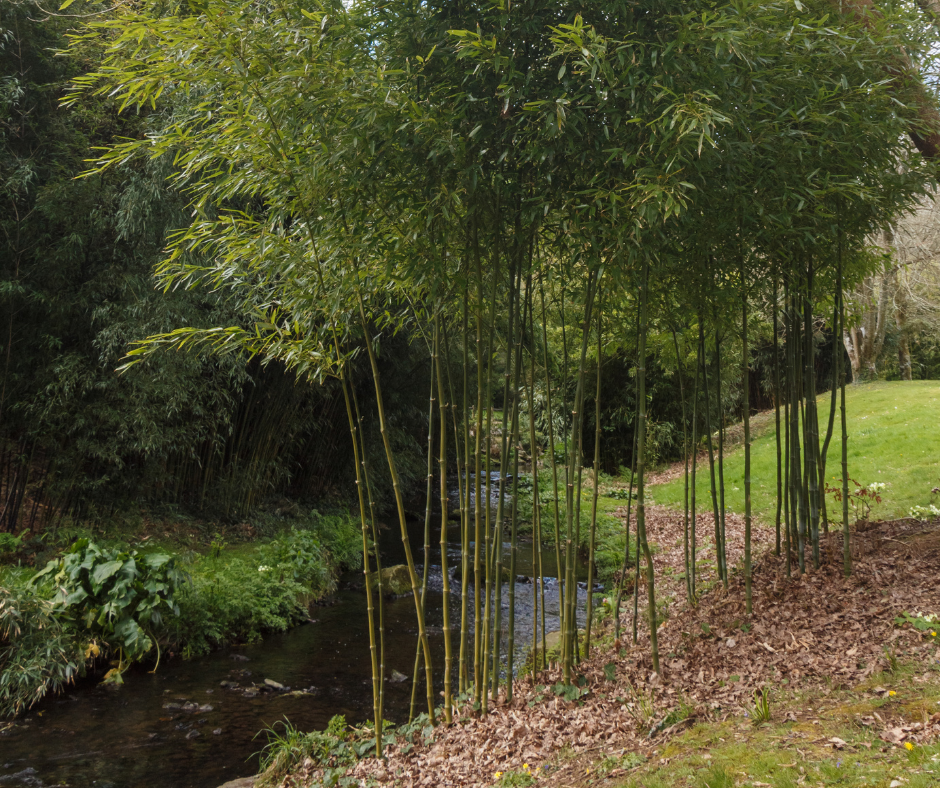 How To Get Rid Of Bamboo Plants And Stop Them From Spreading