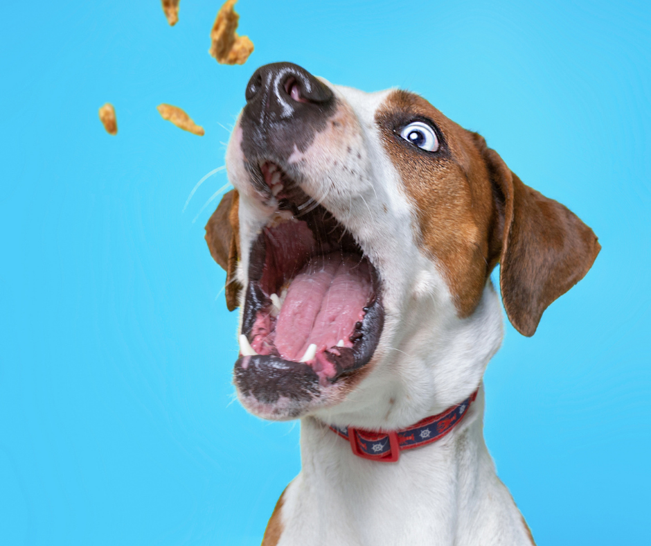 How to Increase the Shelf Life of Homemade Dog Treat
