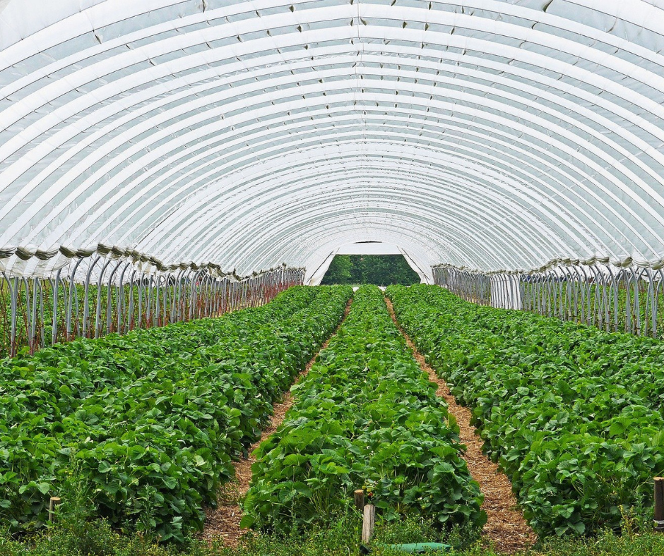 Steps to Take in Starting a Greenhouse Business