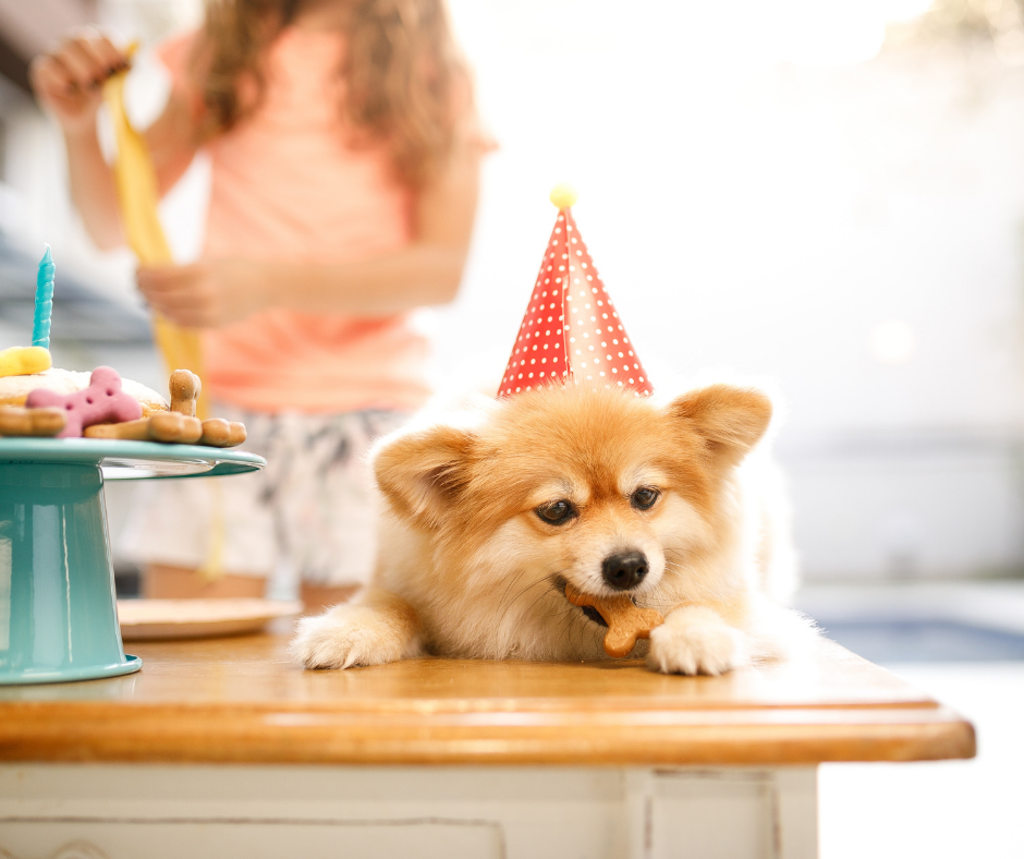The Best Snacks That You Should Be Feeding Your Dogs