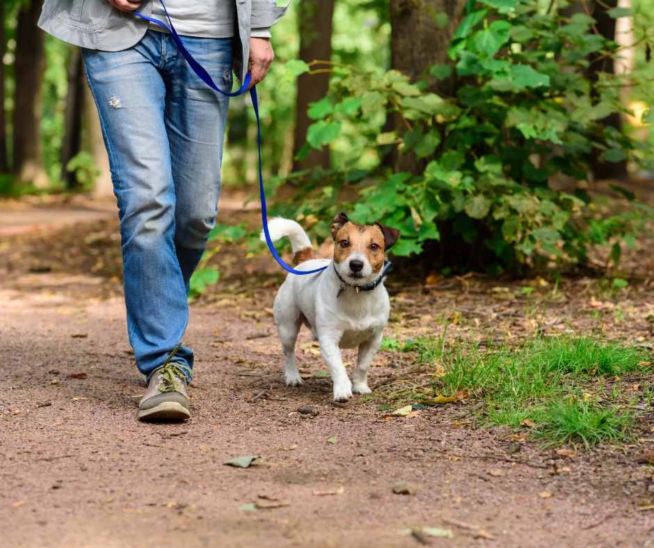The Reasons Why You Should Hike with Your Dog